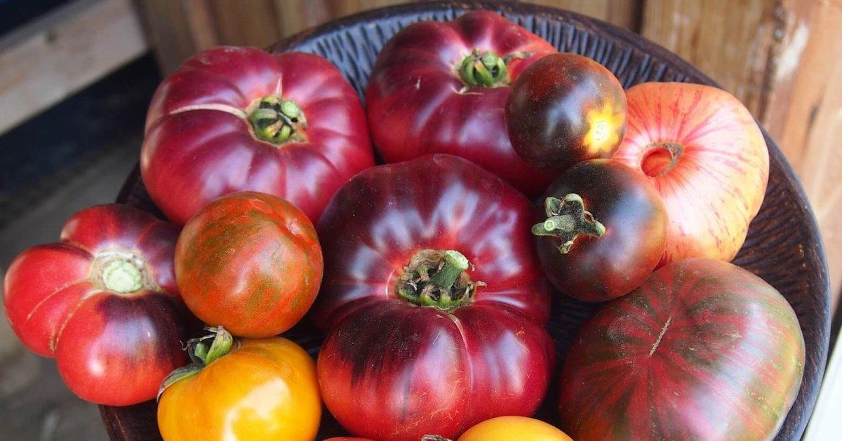 Томат веселый гном характеристика и описание сорта урожайность с фото