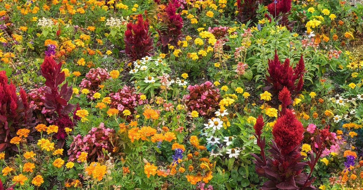 Осенние цветы: название самых красивых растений