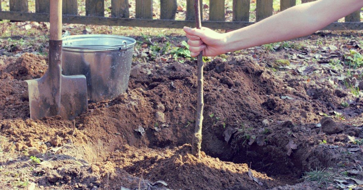 Кислая почва и декоративные растения для нее. Обзор статей на сайте 7 дач