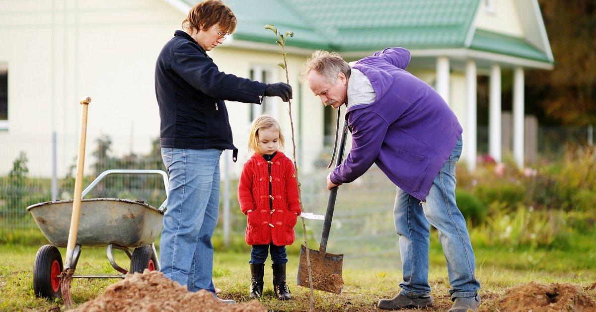 Как правильно посадить сажены яблони весной пошаговая инструкция схема
