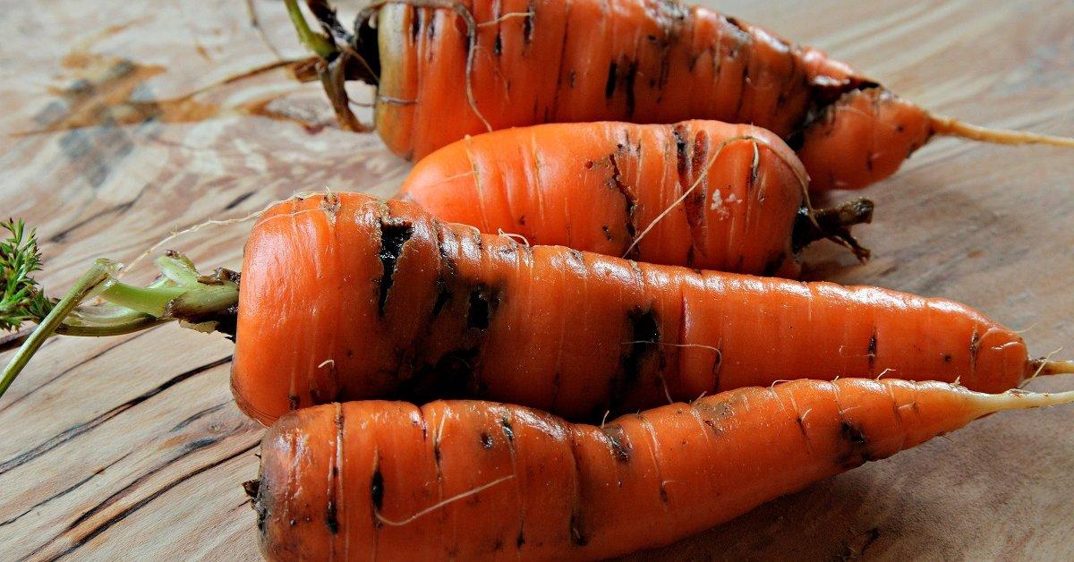 Почему темнеет тертая морковь — Советы дачникам