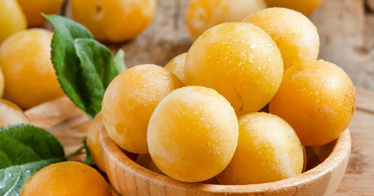 Слива желтая медовая описание сорта