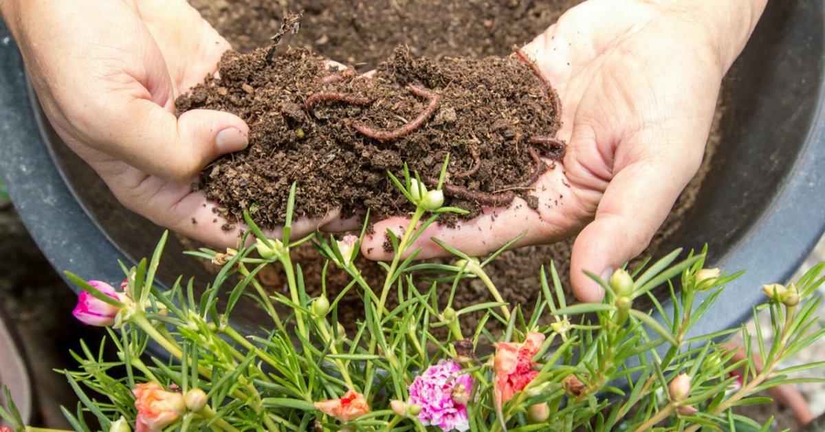 Биоудобрения для почвы