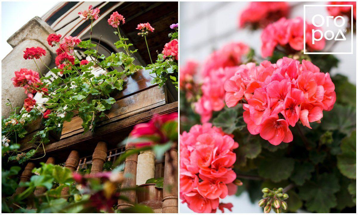 Цветы для не солнечного балкона