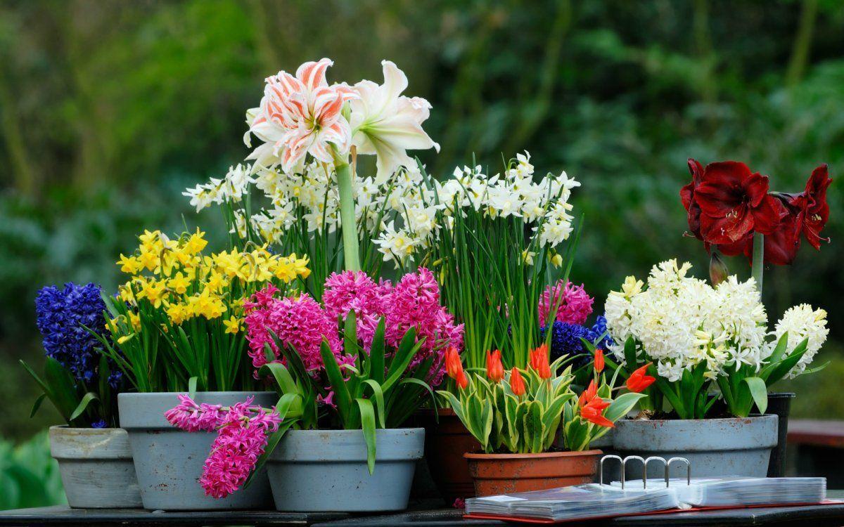 Описание и фото цветов для клумб с