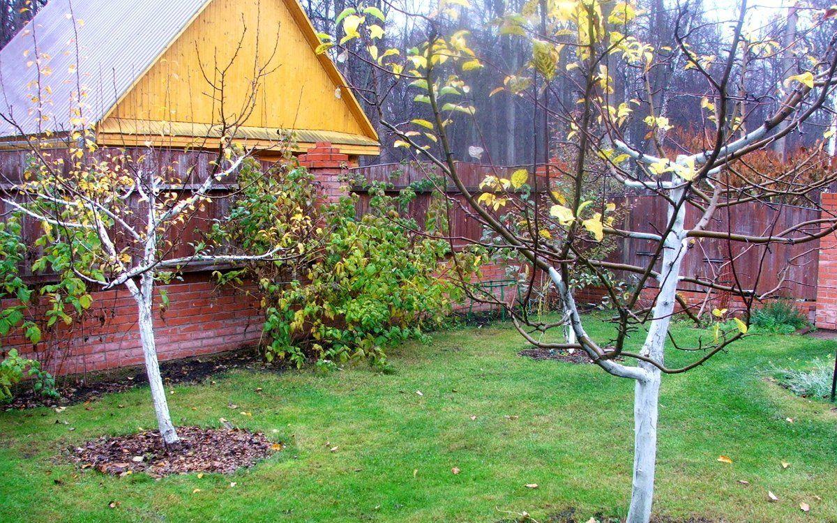 Картинки по запросу сад осенью