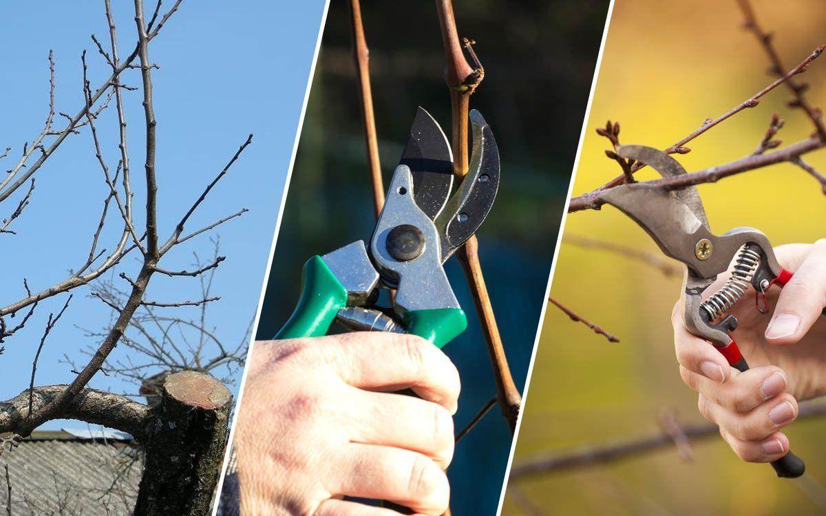 Как обрезать ветку дерева или куста