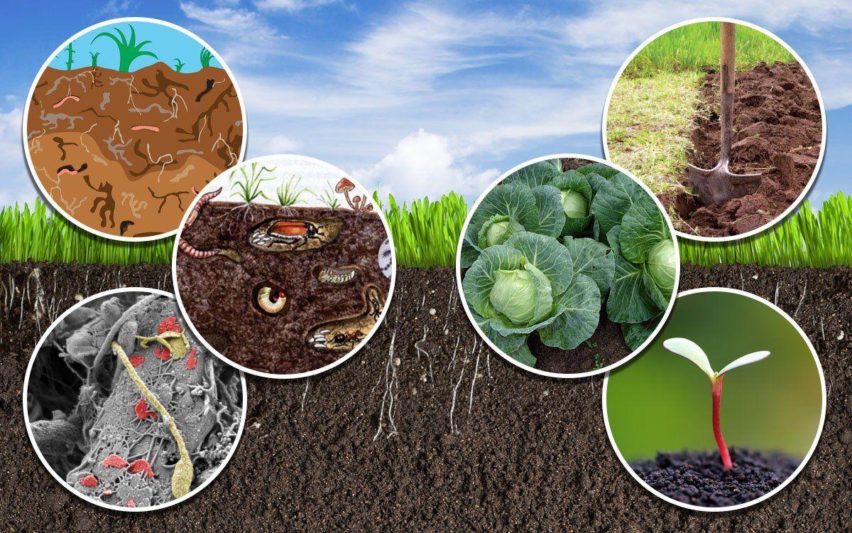 как защитить растения от грибов паразитов