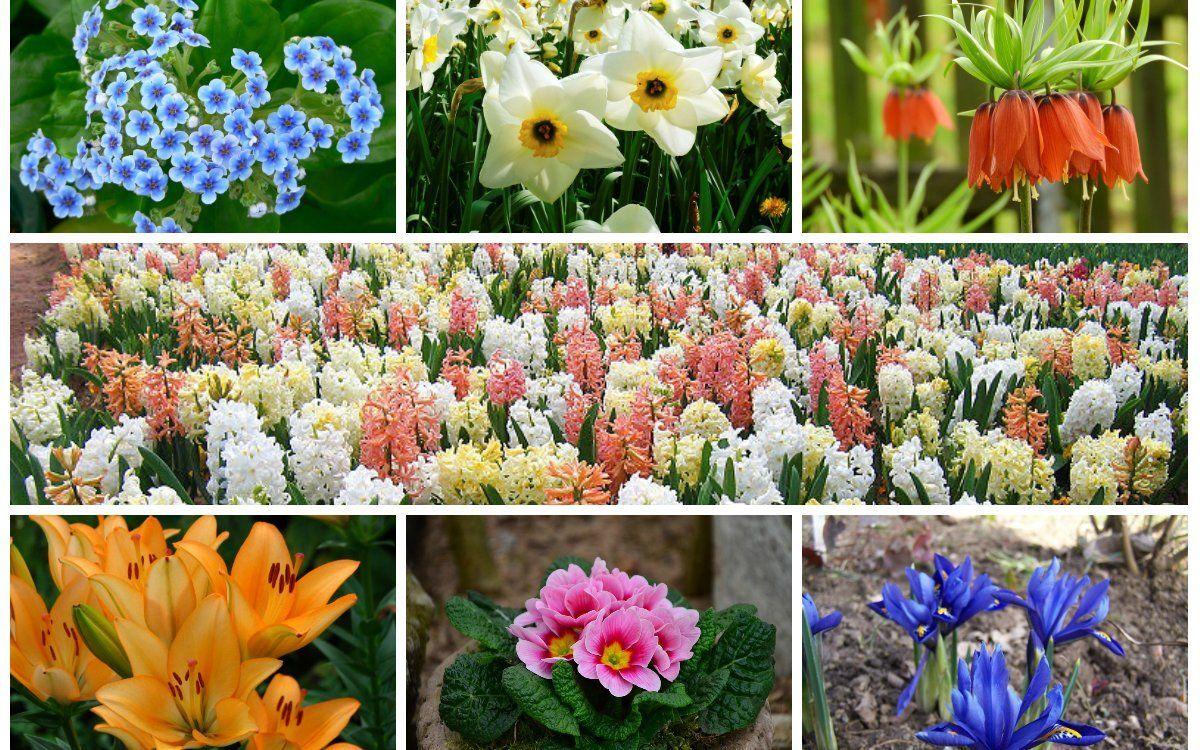 Какие дни пересадить цветы