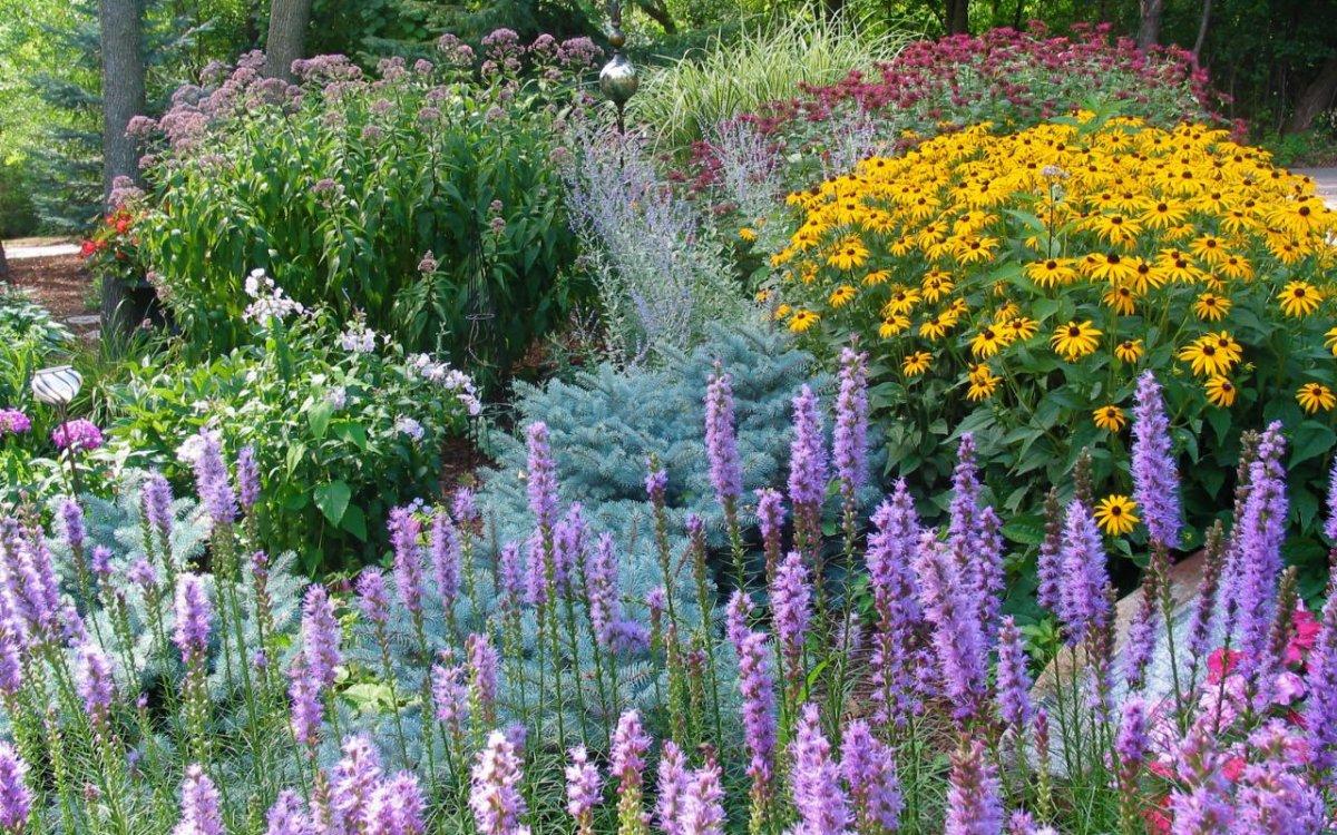 Посадка цветов осенью: какие цветы можно и нужно сеять под зиму   Дизайн участка (Огород.ru)