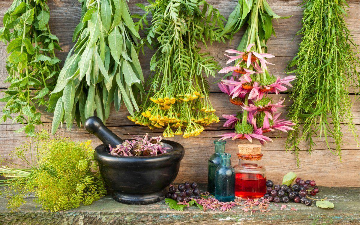 Лекарственные растения целебные травы сбор