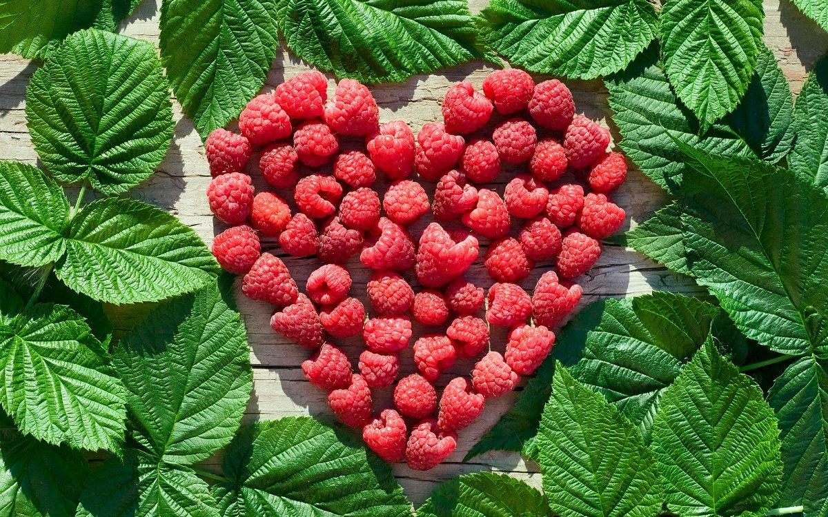 : Лучшие сорта ранней малины