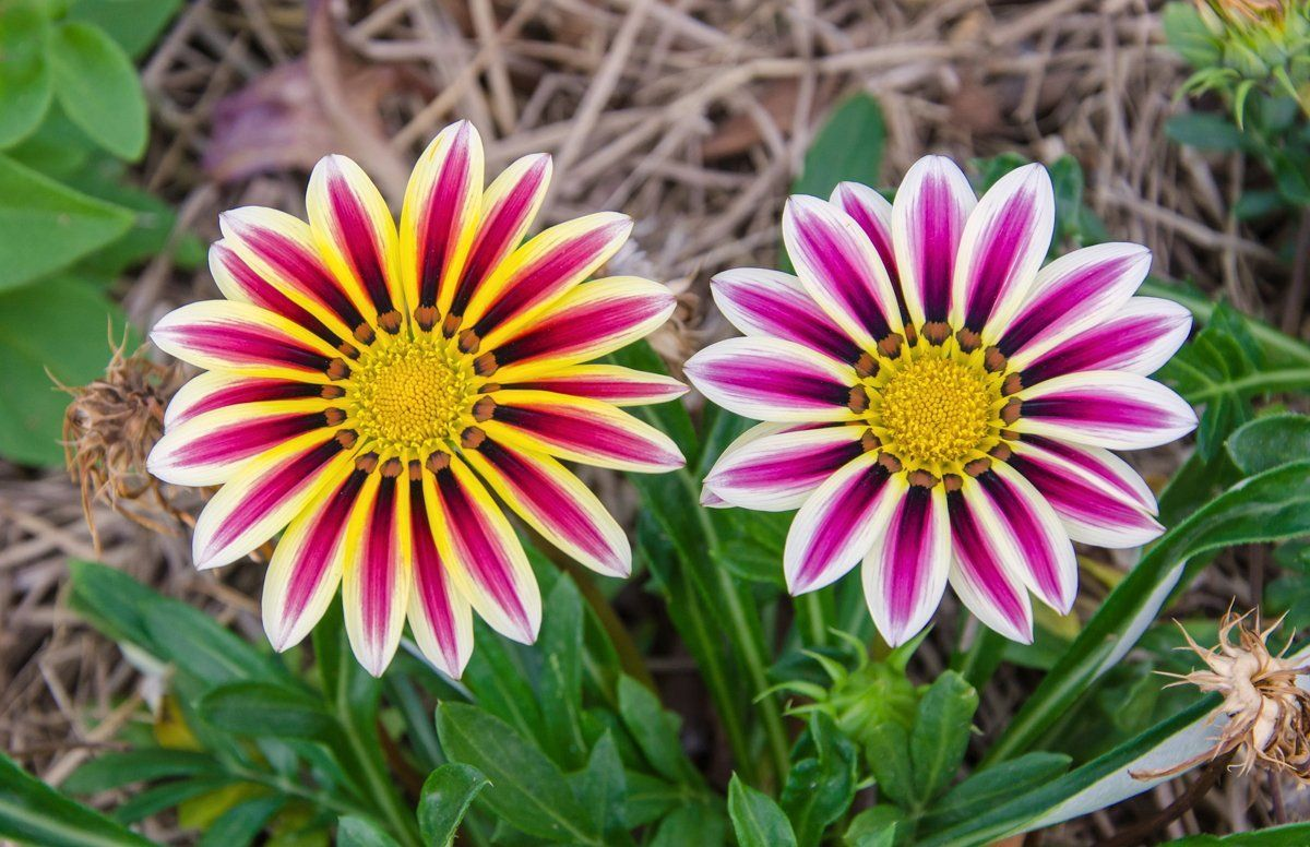 Какие цветы цветут до поздней осени
