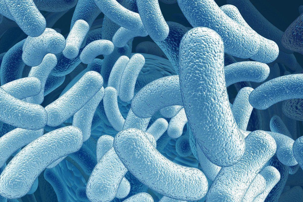 бактерии, бациллы, микробы
