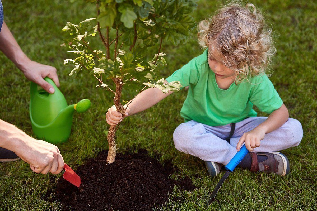 Ребенок сажает дерево