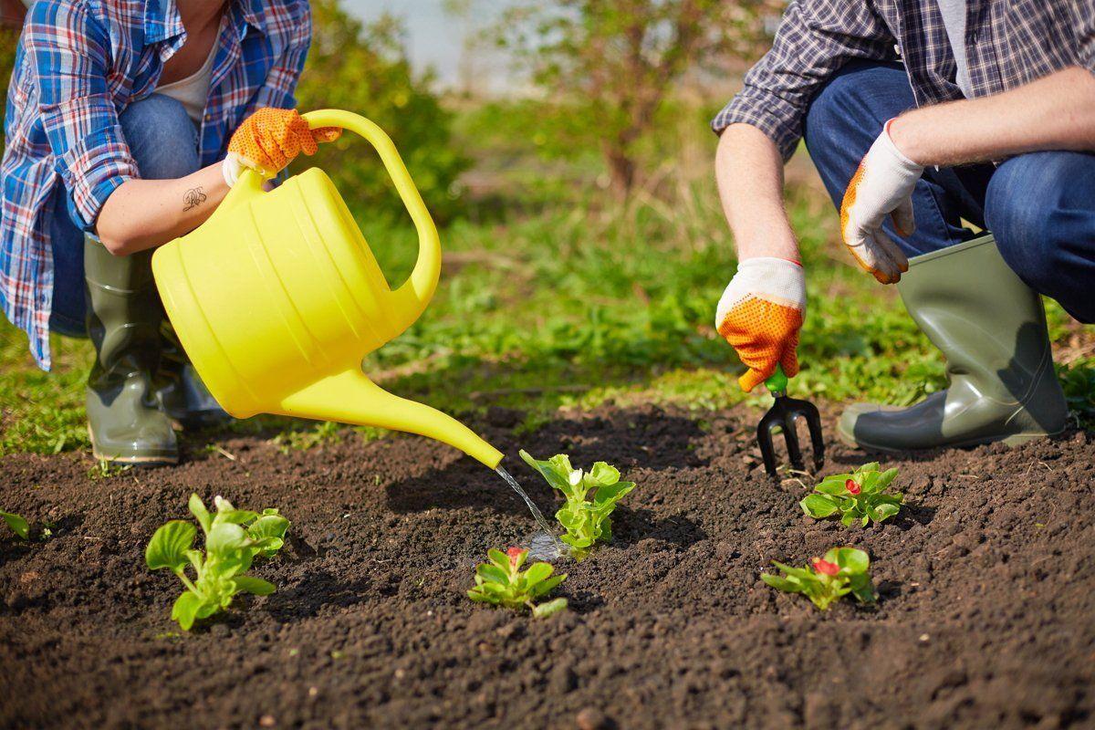 Полив растений на участке