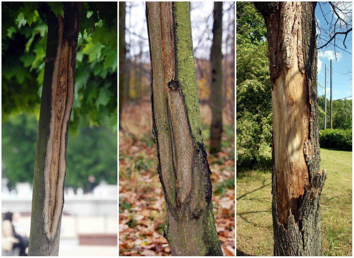 Поврежденные деревья