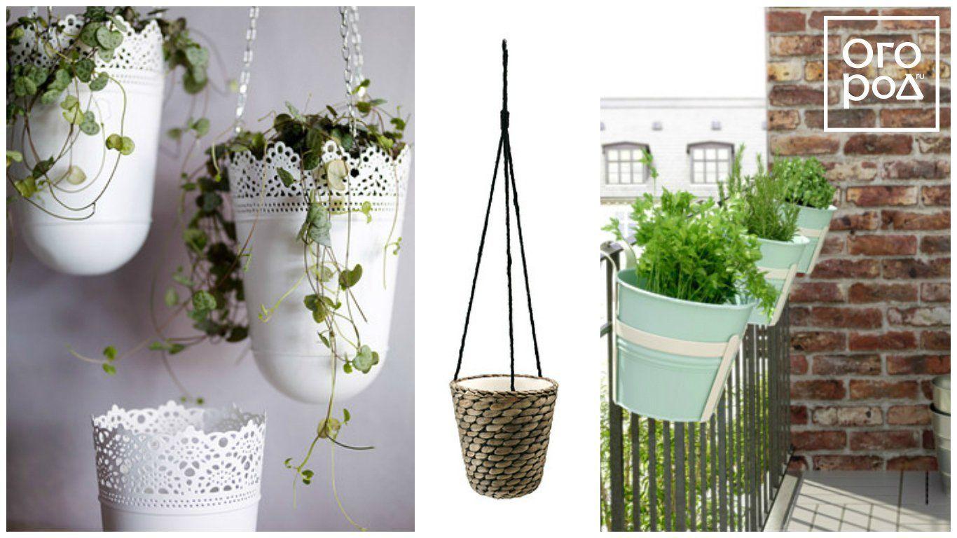 кашпо, ваза, цветы