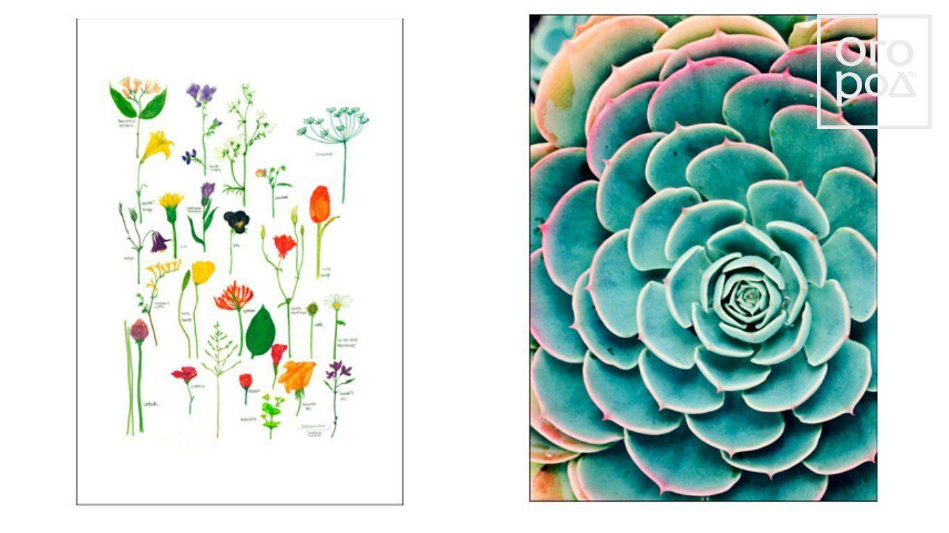 цветы, постер, картина, декор дома