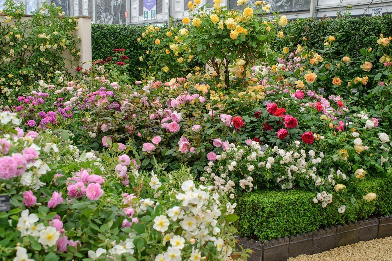 Многообразие роз