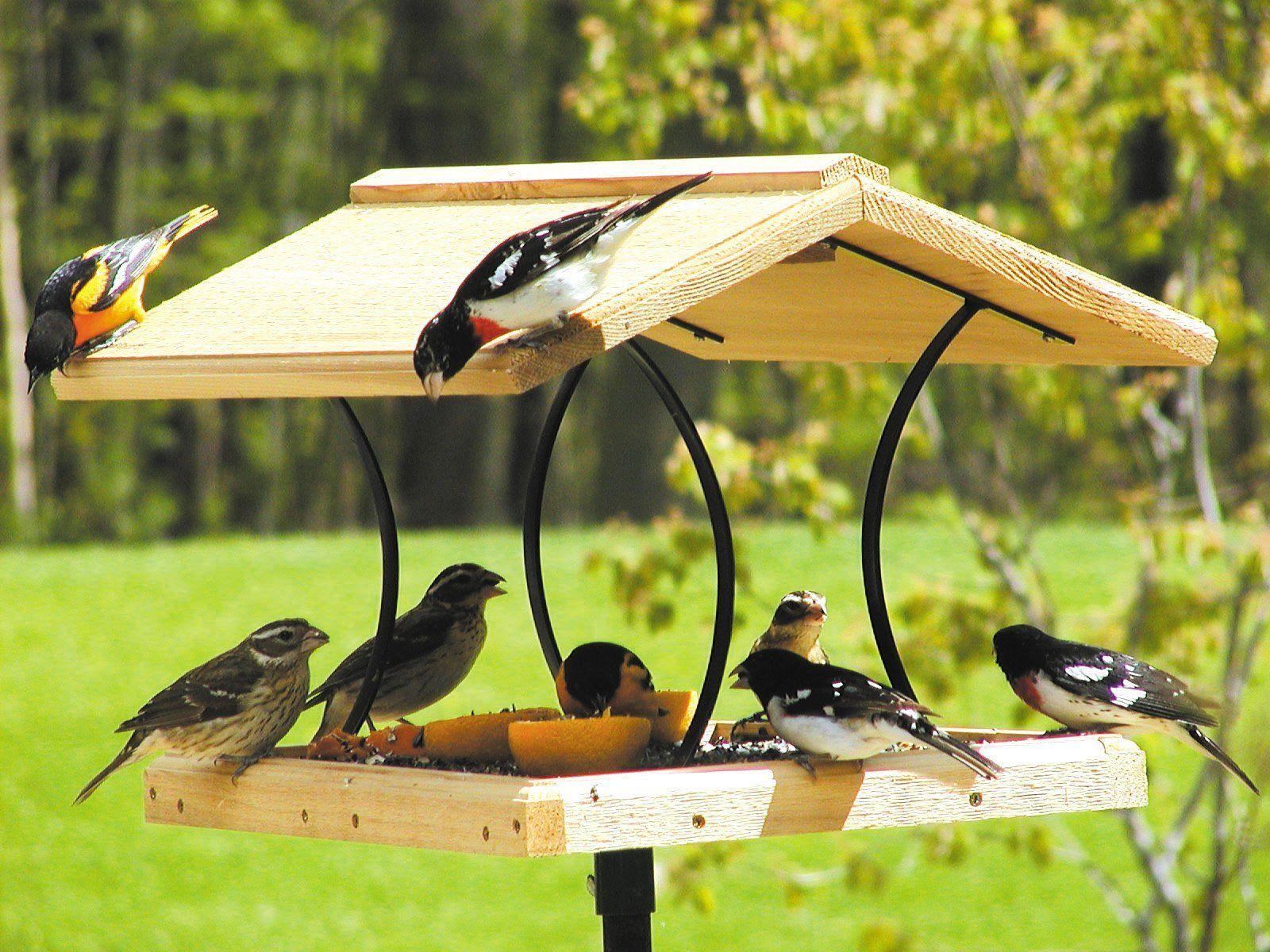 Птицы качественные фото только