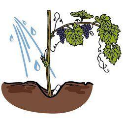 Применение Микохелпа для кустарников и деревьев