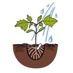 Применение Микохелпа для овощных культур