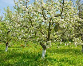 123rf / Alla Iatsun: Садовые деревья