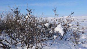 кусты зимой