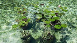 Водные растения