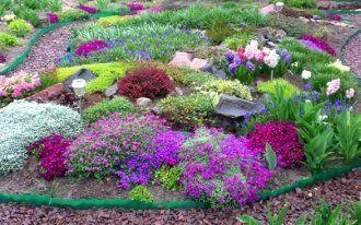 Дизайн пихта в саду