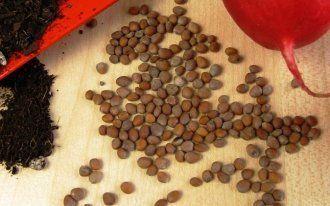 Применение в садоводстве железного купороса 69