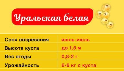 Смородина Уральская белая