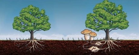 Симбиоз деревьев и грибов