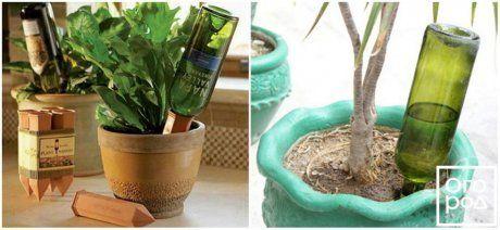 Винная бутылка для полива растений