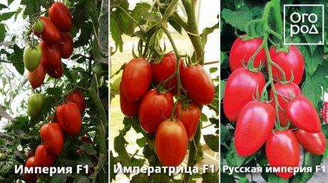 images%7Ccms-image-000046228.jpeg