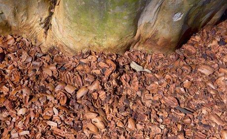 Мульча из ореховой скорлупы