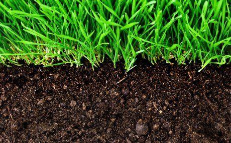 земля с муравейника для рассады