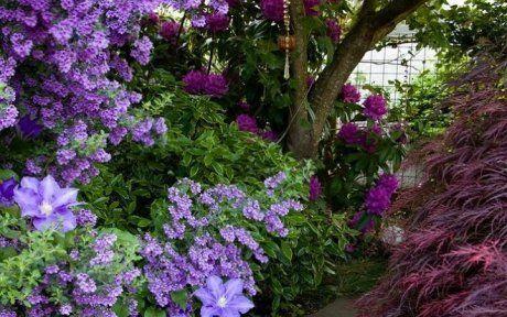 Монохромный фиолетовый сад