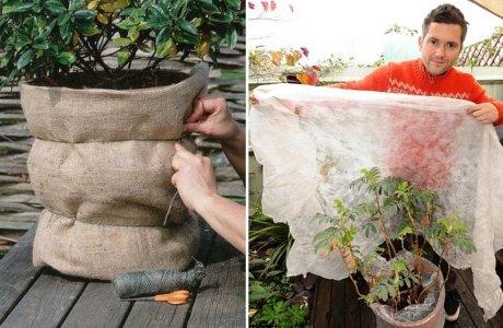 укрытие балконных растений