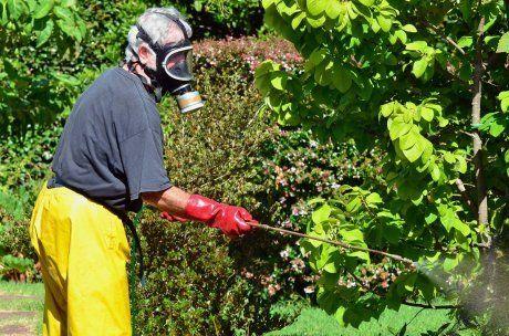 Обработка растений инсектицидами