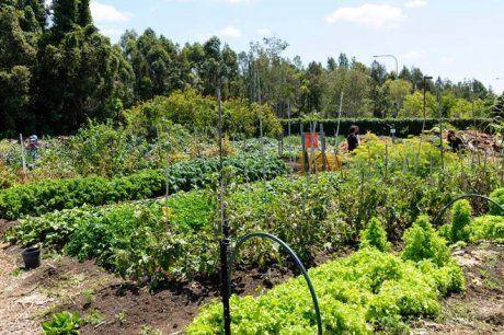 выращивание овощей по методу Джевонсона