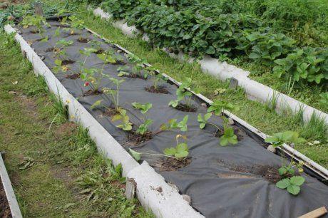 подготовка грядки под клубнику весной