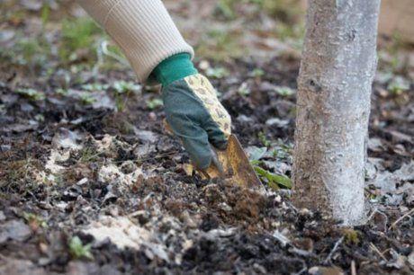 какие удобрения вносят осенью в почву