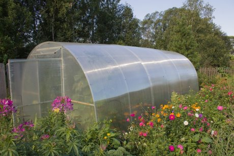 greenhouse for growing vegetables and flowers