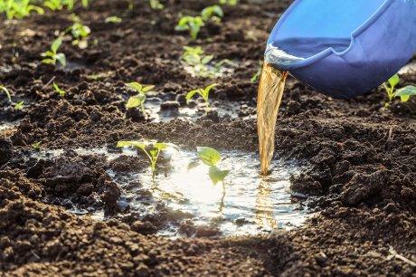 поливать рассаду удобрением
