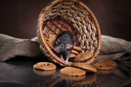 Мышь среди печенья