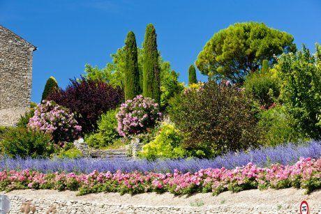 деревья сад прованс