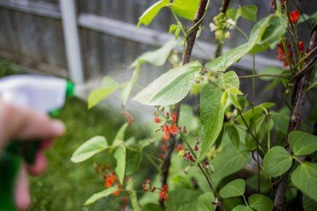 Опрыскивание растений мыльным раствором