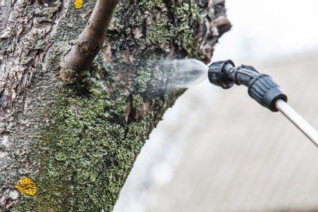 обработка старого дерева
